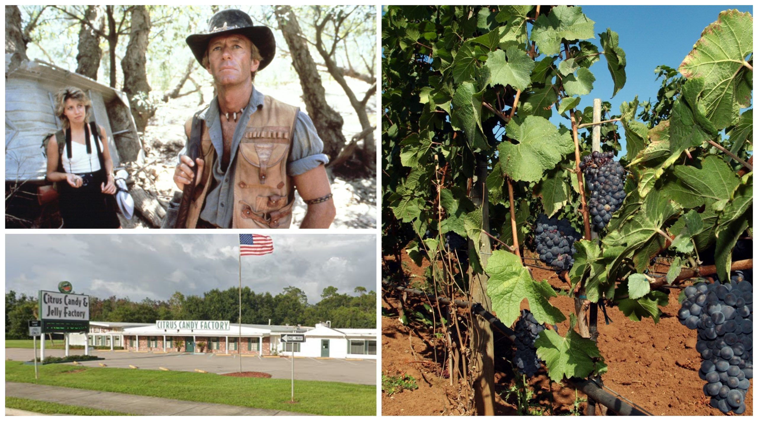 Clockwise from top left: Scene from Crocodile Dundee, a vineyard in Dundee, Oregon and the Davidson of Dundee factory in Florida.
