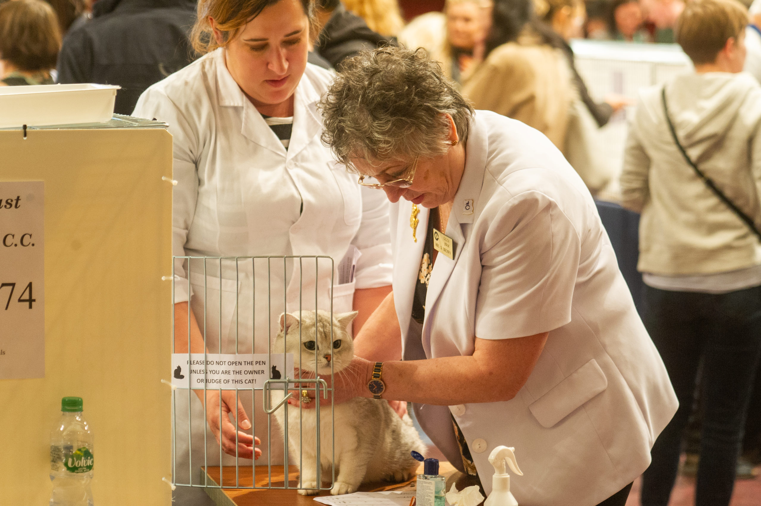 Judging during the 2019 show at the Caird Hall.