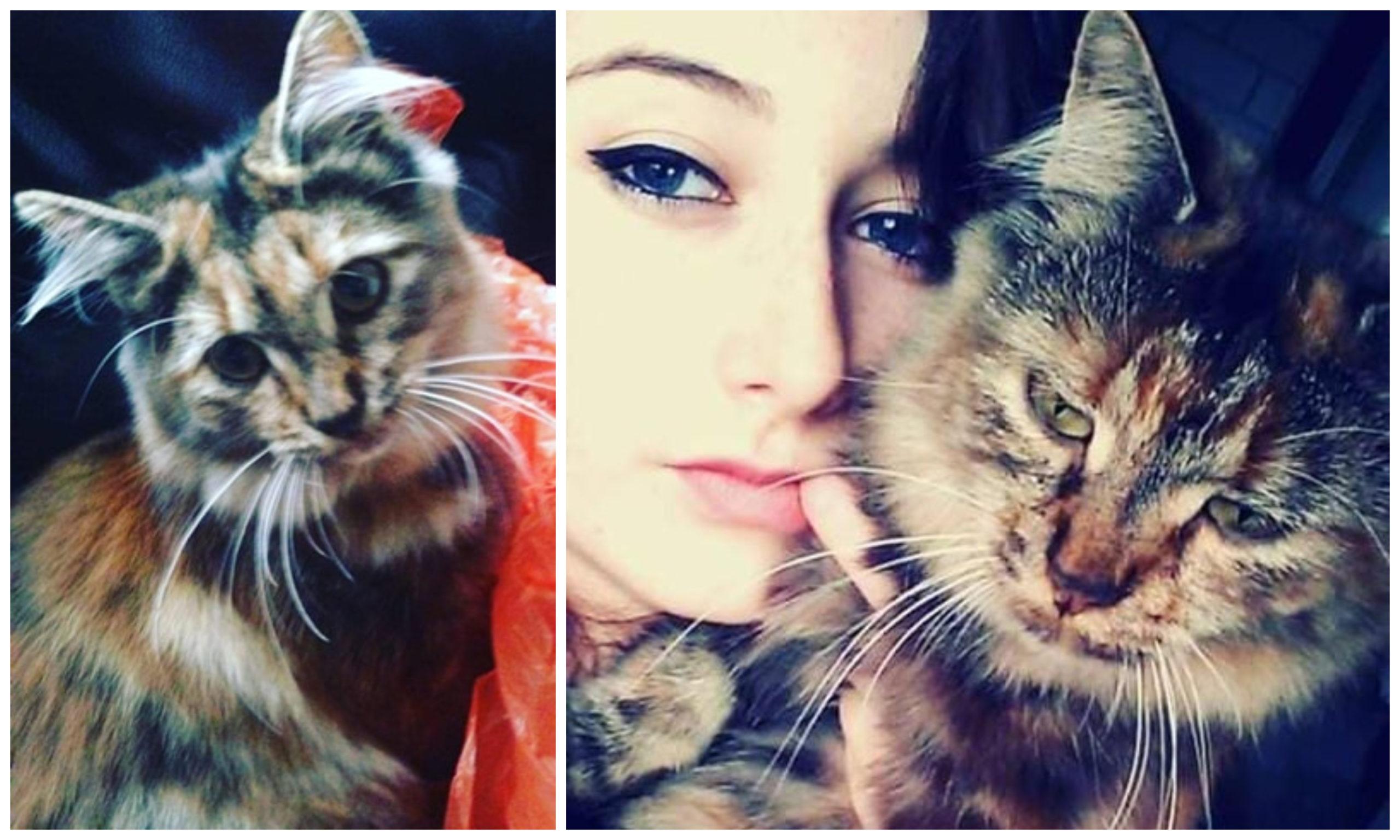 Caitlan Pratt has been left devastated after cat Lulu was run over.