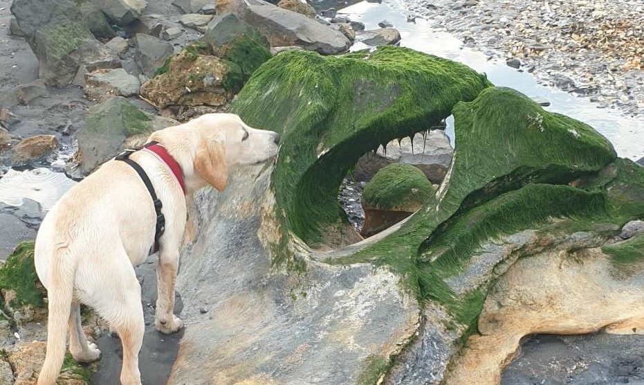 Connor Bertie's dog, Caesar, next to the uncovered skull of the whale.
