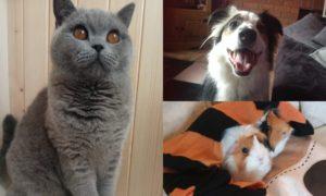 The winning pets.