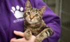More than 3,000 animal welfare incidents were attended by Scottish SPCA staff in Tayside in the first six months of 2020.