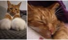 Freddie the cat.