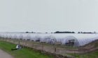 The polytunnels on West Scryne Farm.