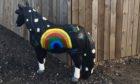 Daisy The Rainbow Pony