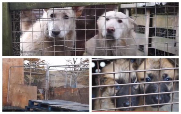 More than 60 dogs and cats were found in horrific conditions by SSPCA workers in Perthshire.