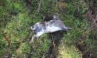 One of the dead rabbits found at Riverside Nature Park.