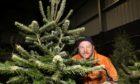 Adam Robinson of Tayside Forestry, Templeton Christmas Tree Farm.