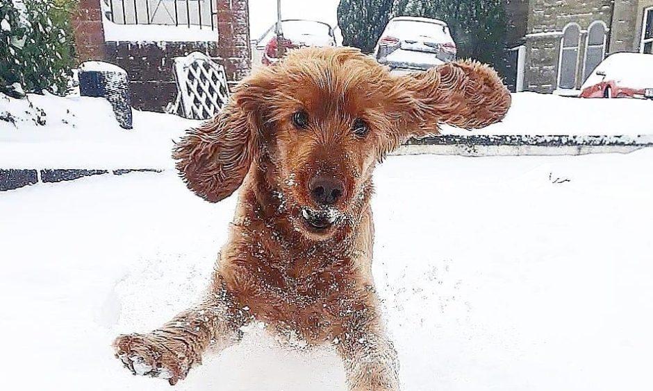 Bailey enjoying the snow.
