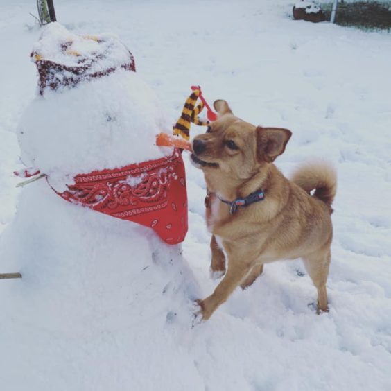 Indy, 2, a rescue pup enjoying her first time in the snow in Carnoustie.