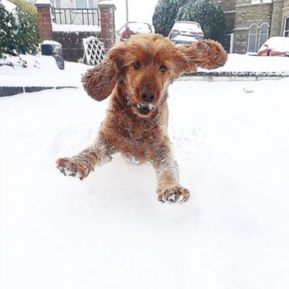 Pup Bailey enjoying the snow.