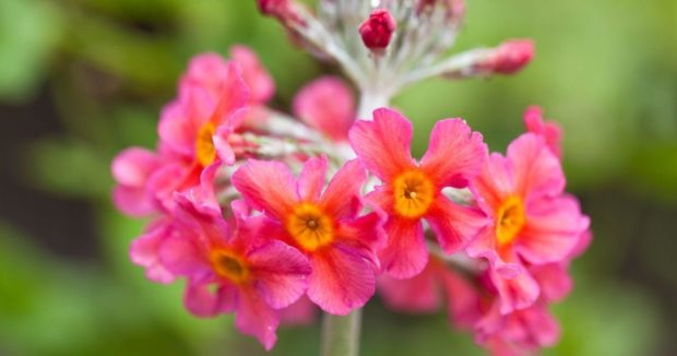 Beautiful Perennials to Consider Introducing to your Garden