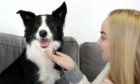 """Evening telegraph/ Courier news CR0026796   G Jennings pics ,  Georgia Ellie (23) from carnoustie with her  8 year old border collie dog """" Will"""" whose Tik Tok video of him laying his head on Georgia,s hand has gone viral, VIDEO DONE AS WELL,  tuesday 23rd february."""