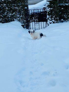 Romanian rescue pooch Derry Dundee enjoying the snow in Broughty Ferry.