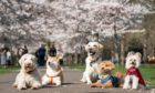Dogs from K9 College are lined for a photo along a path lined with blossoms in Battersea Park, London. Picture date: Monday March 22, 2021. PA Photo. Photo credit should read: Aaron Chown/PA Wire