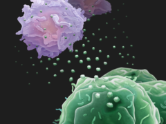 Artist's impression of tumour cells (lower right) secreting exosome 'drones' to fight immune system T-cells (upper left). (Wei Guo/ Xiaowei Xu/University of Pennsylvania/PA)