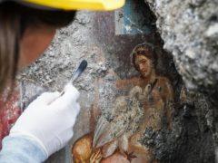 An archeologist cleans up the fresco Leda And The Swan (Cesare Abbate/Ansa/AP)