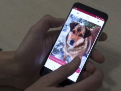 Dog matching app GetPet in action (Mindaugas Kulbis/Associated Press)