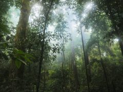 Loss of intact tropical forest has a bigger than realised climate impact, scientists say (University of Queensland/PA)