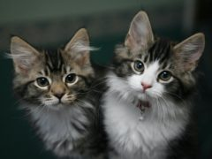 Analysis showed 13.5% of all sampled cats displayed at least one of the several traits associated with separation-related problems (Nick Ansell/PA)