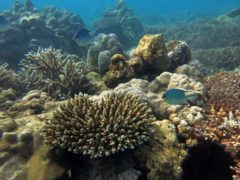 A recovering reef in Seychelles (Nick Graham/Lancaster University)