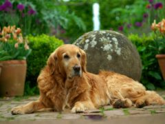 Nigel often stole the show on BBC Two's Gardeners' World (BBC)
