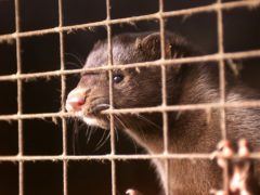 Non-British residents or citizens have been banned from entering the UK from Denmark after a strain of coronavirus linked to Danish mink farms was discovered (Chris Ison/PA)