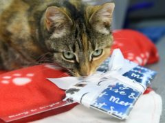 Pets At Home has bought The Vet Connection for £15m (Jonathan Hordle/PA)