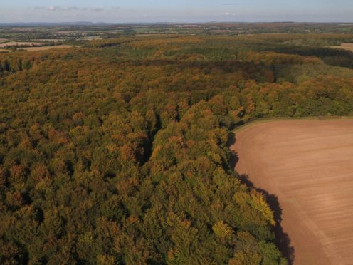 Woodland cover in England could be doubled, new mapping suggests (Andrew Matthews/PA)