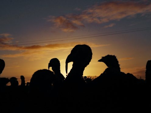 Turkeys will be culled at North Allerton, North Yorks (PA)