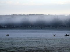 Deer sit in the frosted grass in Windsor Great Park, Berkshire (PA)