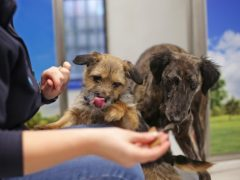 Vet group CVS said the whole sector is benefiting from increased pet ownership (PA)