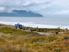 People walk near a beach following a shark attack at Bowentown, near Waihi, in New Zealand (George Novak/Bay of Plenty Times via AP)