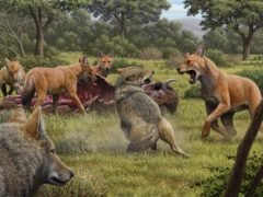 The dire wolf has been made famous by Game Of Thrones (Mauricio Antón/Nature)