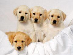 The Home Secretary has pledged to 'go after' pet thieves (David Jones/PA)