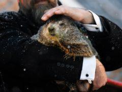 Groundhog Club handler AJ Dereume holds Punxsutawney Phil (AP/Barry Reeger)