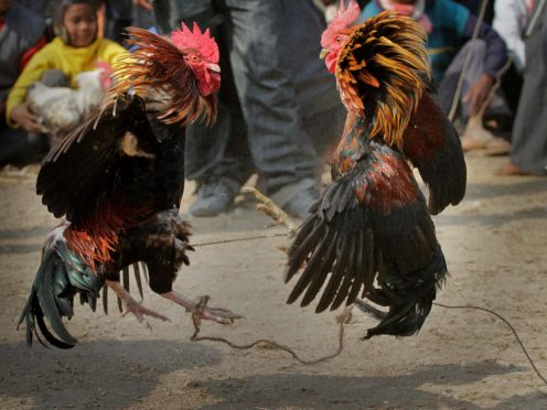 People watch a cock fight (Anupam Nath/AP)