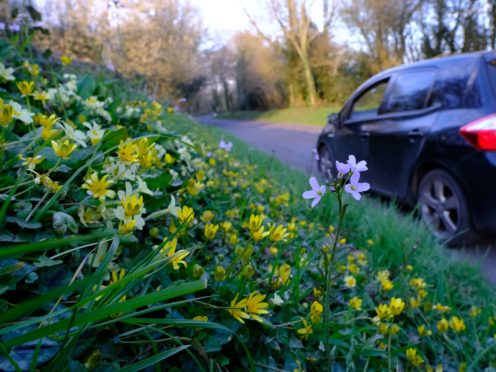Spring flowers bloom on a roadside verge (Matt Pitts/Plantlife/PA)