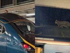 A cat walks about on top of a train at London Euston station (Network Rail/PA)