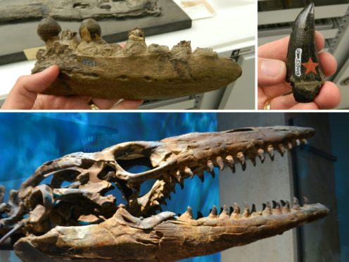 Study of prehistoric teeth sheds new light on the eating habits of lizards and snakes from 100 million years ago (Tom Stubbs/PA)