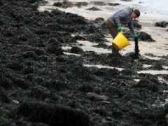 A new guide on seaweed cultivation in Scotland has been published (Brian Lawless/PA)