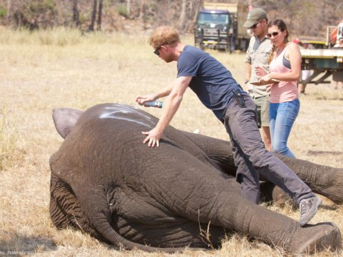 Prince Harry while he worked in Malawi with African Parks (Kensington PAlace/PA)