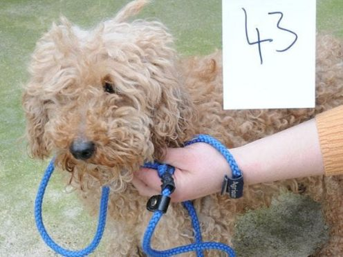 A suspected stolen dog that police want to reunite with the owner (Suffolk Police/PA)