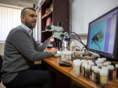 Professor Halil Ibrahimi looks under a microscope at an insect named Potamophylax coronavirus inside a lab in Pristina, Kosovo (Visar Kryeziu/AP)