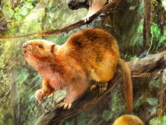 An artist's impression showing what the three new species of fossil cloud rats might have looked like (Velizar Simeonovski/Field Museum)