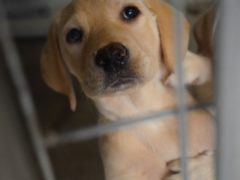 Michelle Boyd says some people are 'taking things in their own hands' to protect themselves from puppy theft (Scottish SPCA/PA)