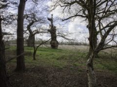 Ancient trees at Oxburgh Hall, Norfolk (Gerald Peachey/Red Zebra Photography/National Trust/PA)
