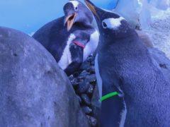 (Sea Life London Aquarium)