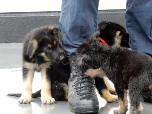 Some of the puppies named in honour of Sgt Mata Ratana (Met Police/PA)