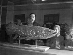 Visitors to the Natural History Museum in Paris look at a coelacanth exhibit (AP/Pierre Godot, File)